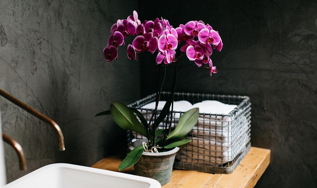 biljke za kupatilo orhideja
