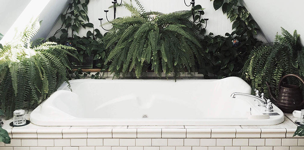 sobne biljk za kupatilo