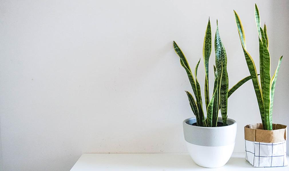 biljke koje su pogodne za kupatilo koje upijaju vlagu