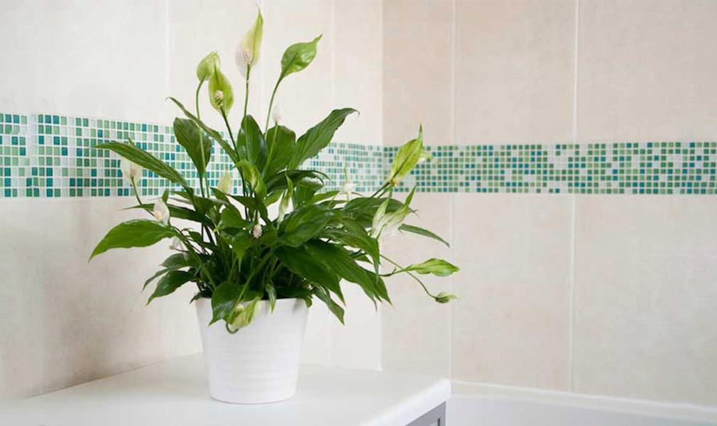 male biljke za kupatilo